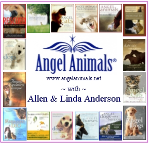 Angel Animals
